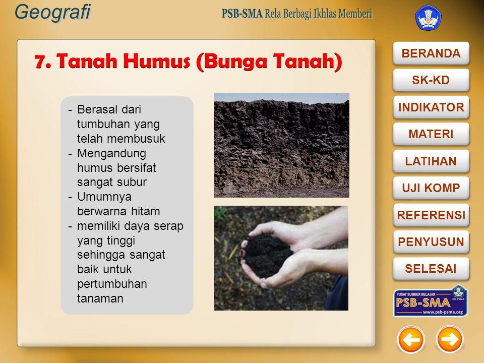 7. Tanah Humus (Bunga Tanah)