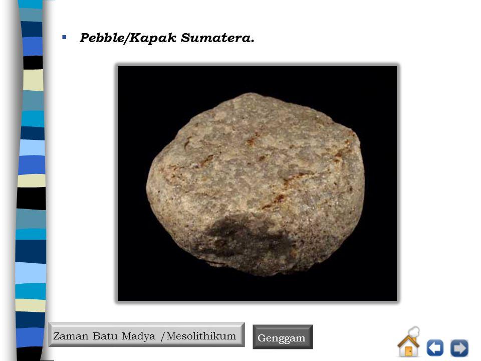 Pebble/Kapak Sumatera.
