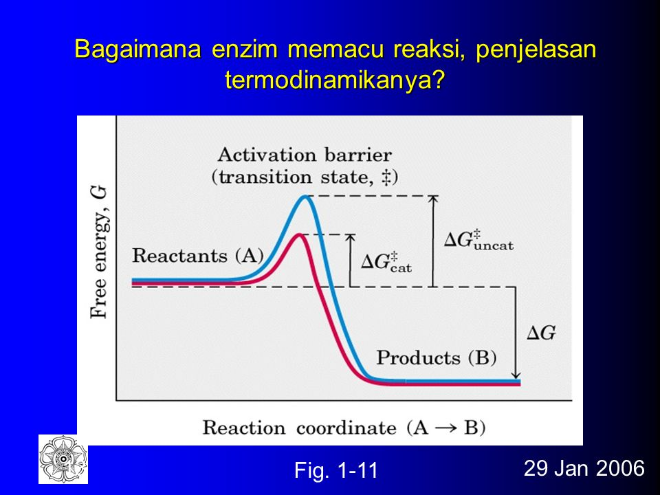 Bagaimana enzim memacu reaksi, penjelasan termodinamikanya