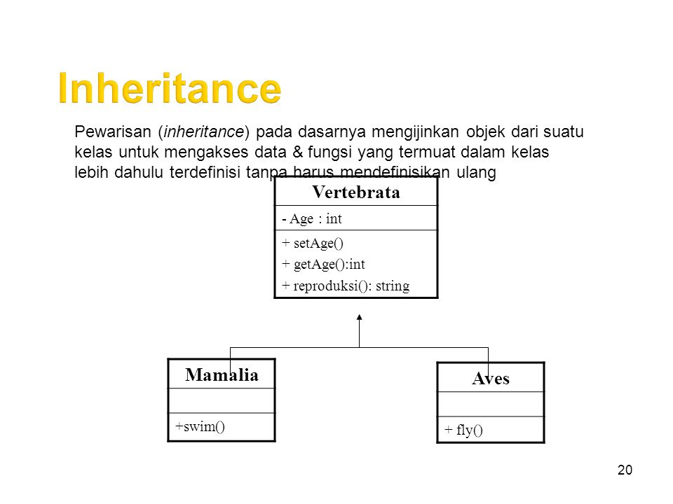 Inheritance Vertebrata Mamalia Aves