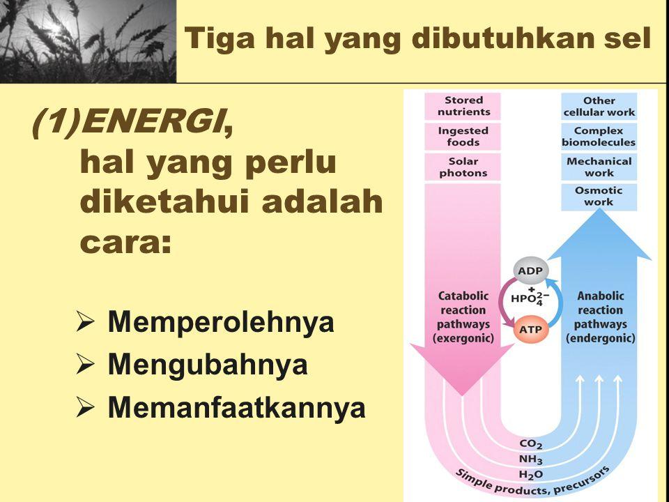 ENERGI, hal yang perlu diketahui adalah cara: