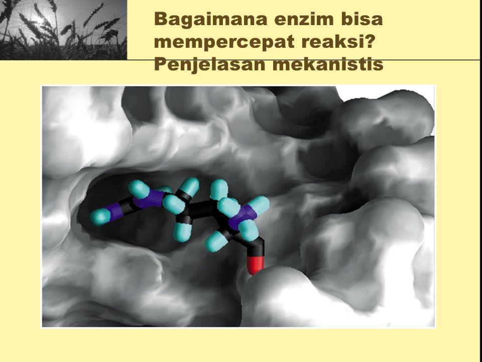 Bagaimana enzim bisa mempercepat reaksi Penjelasan mekanistis