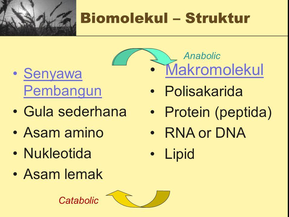 Makromolekul Biomolekul – Struktur Senyawa Pembangun Polisakarida