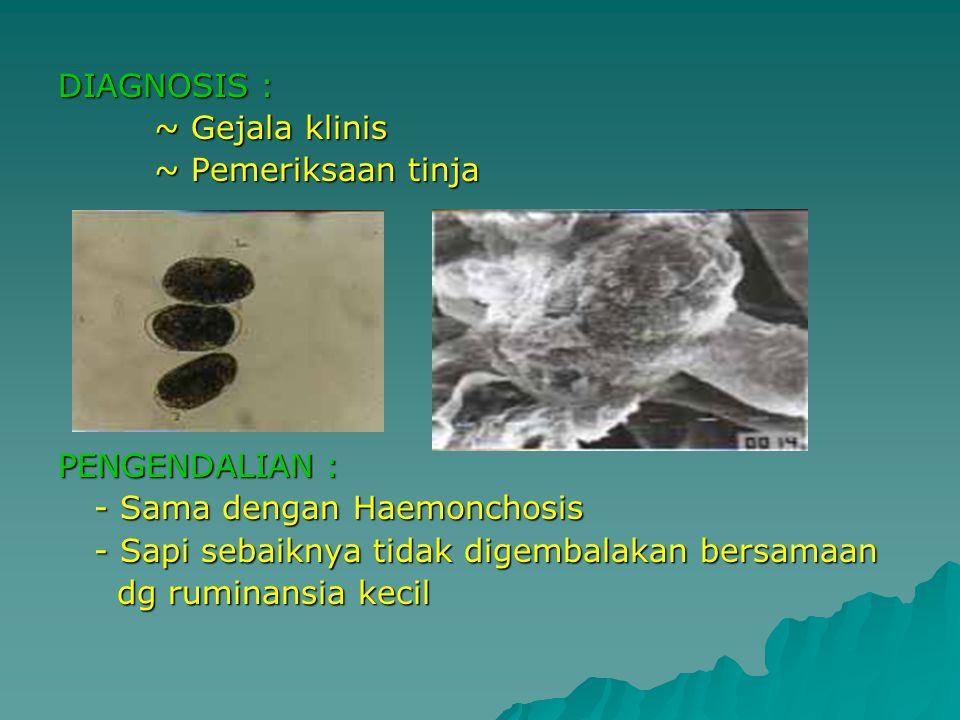 DIAGNOSIS : ~ Gejala klinis. ~ Pemeriksaan tinja. PENGENDALIAN : - Sama dengan Haemonchosis. - Sapi sebaiknya tidak digembalakan bersamaan.