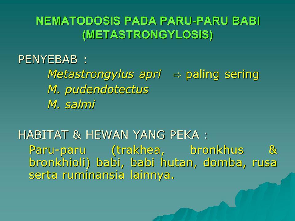NEMATODOSIS PADA PARU-PARU BABI (METASTRONGYLOSIS)