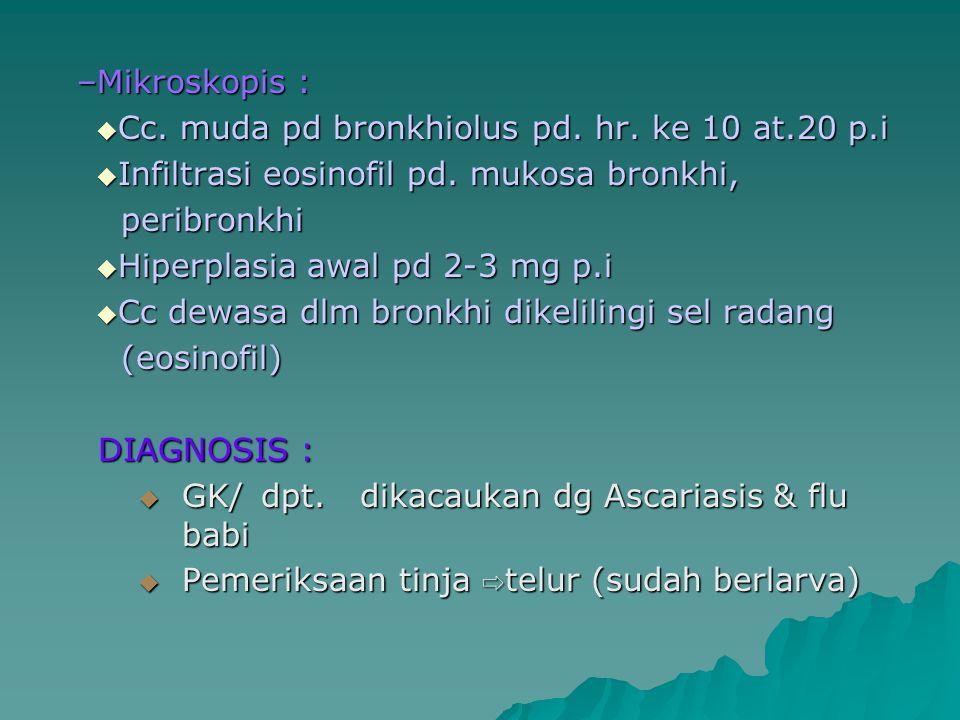 Mikroskopis : Cc. muda pd bronkhiolus pd. hr. ke 10 at.20 p.i. Infiltrasi eosinofil pd. mukosa bronkhi,