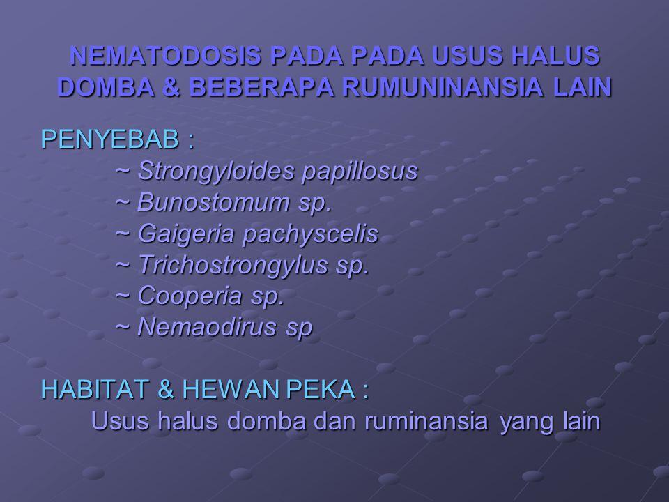 NEMATODOSIS PADA PADA USUS HALUS DOMBA & BEBERAPA RUMUNINANSIA LAIN