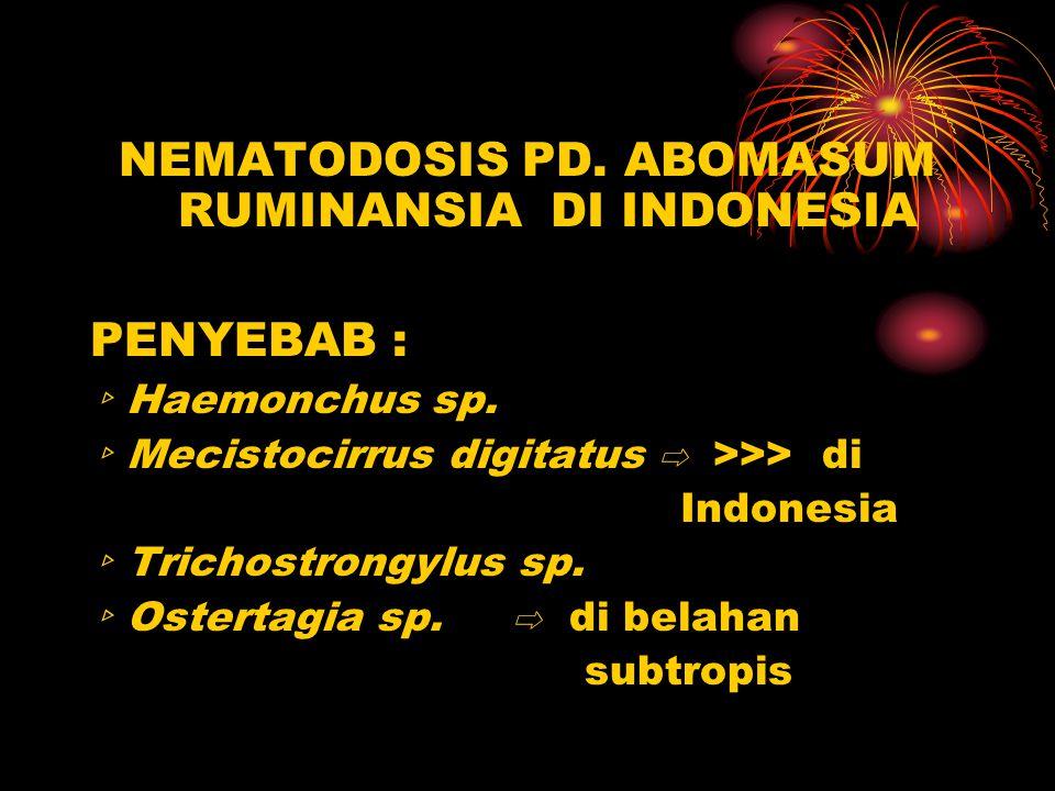 NEMATODOSIS PD. ABOMASUM RUMINANSIA DI INDONESIA