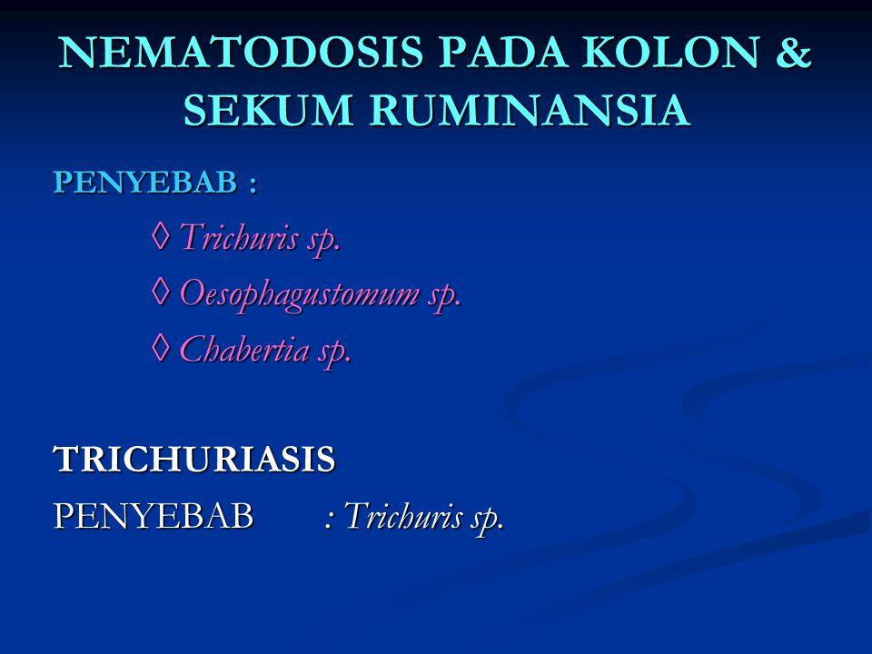NEMATODOSIS PADA KOLON & SEKUM RUMINANSIA