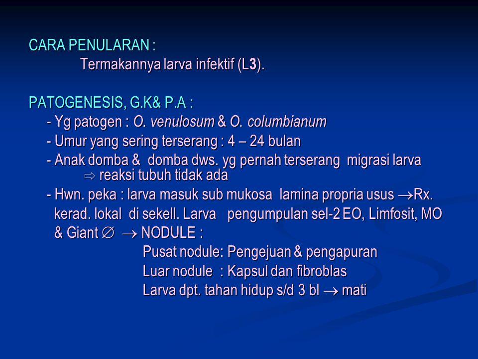 CARA PENULARAN : Termakannya larva infektif (L3). PATOGENESIS, G.K& P.A : - Yg patogen : O. venulosum & O. columbianum.
