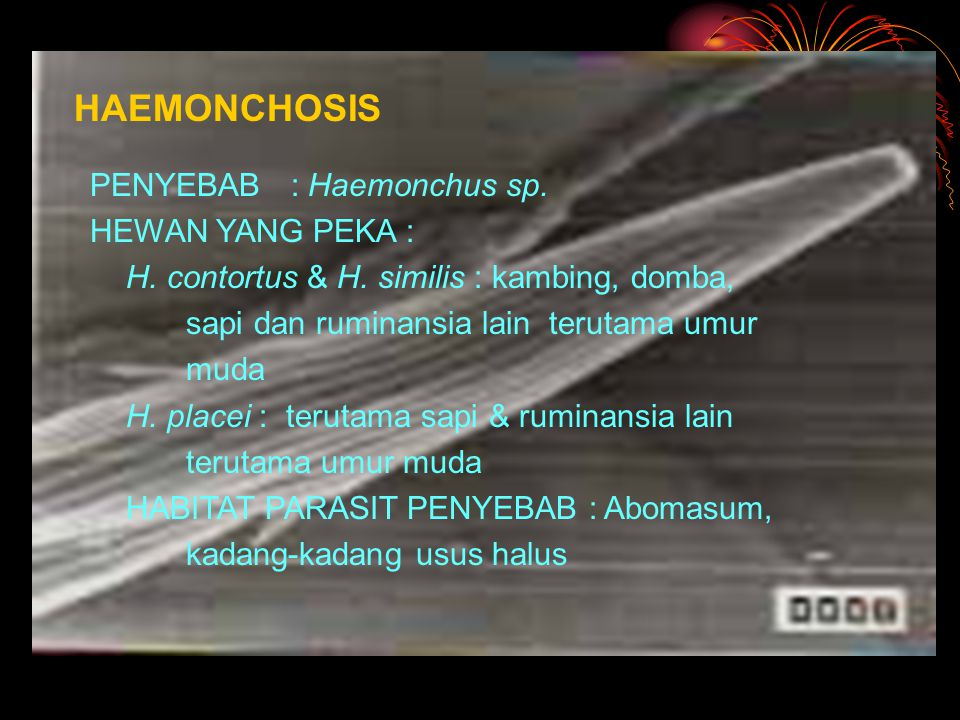 HAEMONCHOSIS PENYEBAB : Haemonchus sp. HEWAN YANG PEKA :