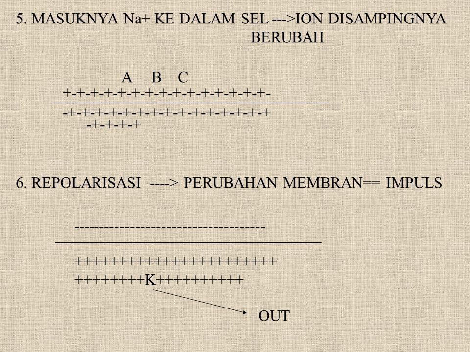 5. MASUKNYA Na+ KE DALAM SEL --->ION DISAMPINGNYA