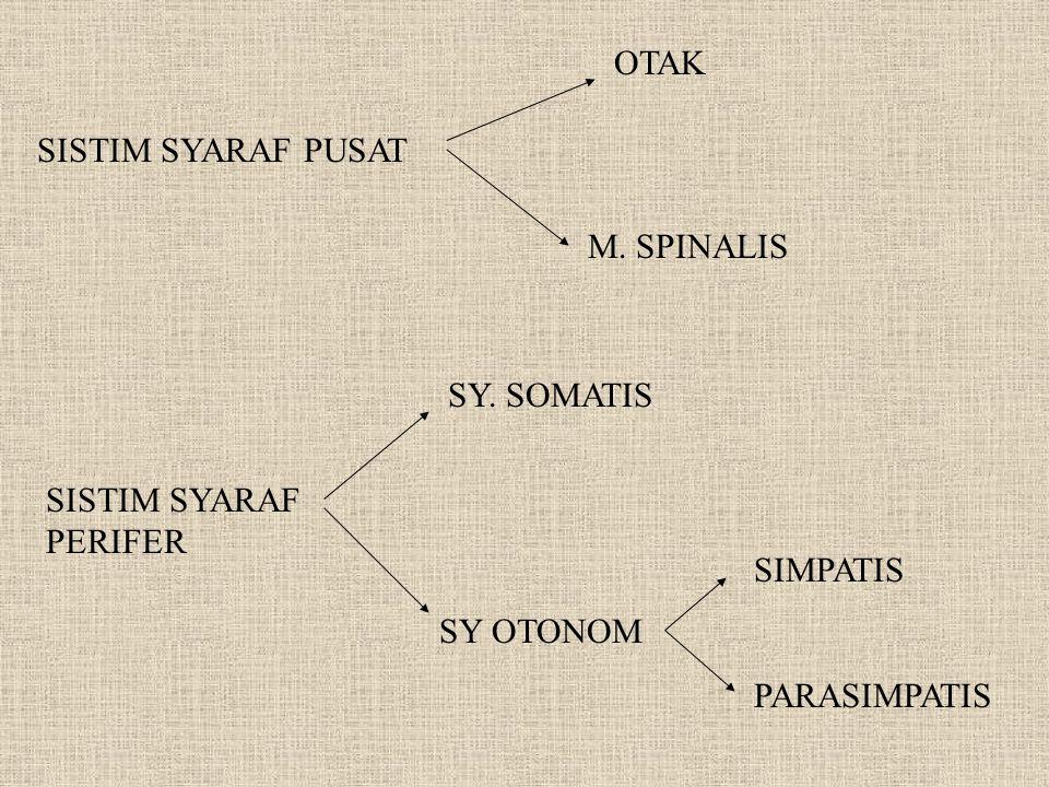OTAK SISTIM SYARAF PUSAT. M. SPINALIS. SY. SOMATIS. SISTIM SYARAF. PERIFER. SIMPATIS. PARASIMPATIS.