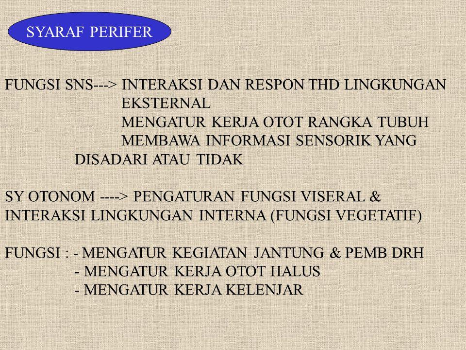 SYARAF PERIFER FUNGSI SNS---> INTERAKSI DAN RESPON THD LINGKUNGAN EKSTERNAL. MENGATUR KERJA OTOT RANGKA TUBUH.
