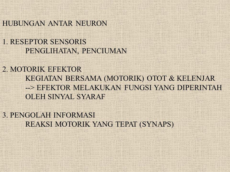 HUBUNGAN ANTAR NEURON 1. RESEPTOR SENSORIS. PENGLIHATAN, PENCIUMAN. 2. MOTORIK EFEKTOR. KEGIATAN BERSAMA (MOTORIK) OTOT & KELENJAR.