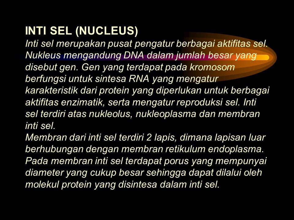 INTI SEL (NUCLEUS) Inti sel merupakan pusat pengatur berbagai aktifitas sel.