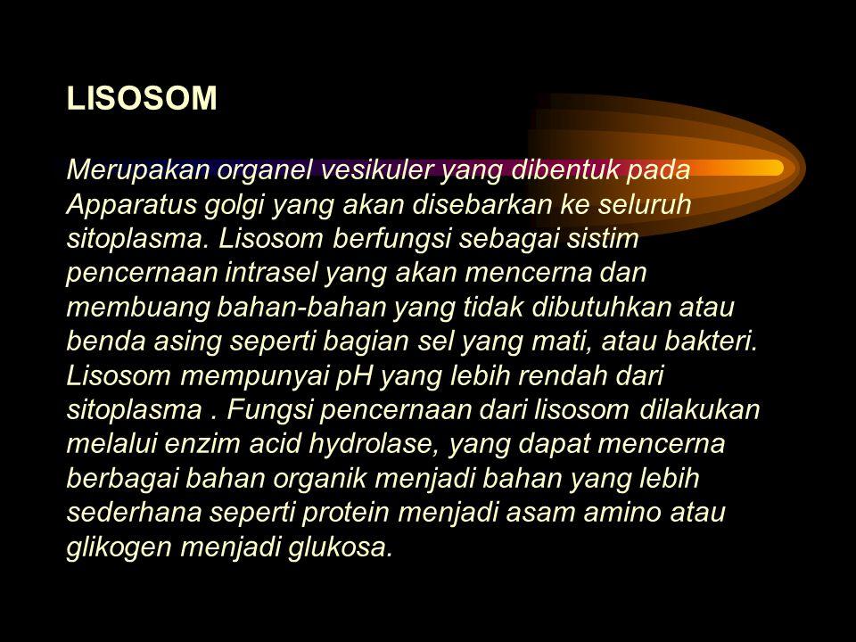 LISOSOM Merupakan organel vesikuler yang dibentuk pada Apparatus golgi yang akan disebarkan ke seluruh sitoplasma.
