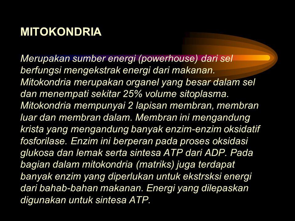 MITOKONDRIA Merupakan sumber energi (powerhouse) dari sel berfungsi mengekstrak energi dari makanan.