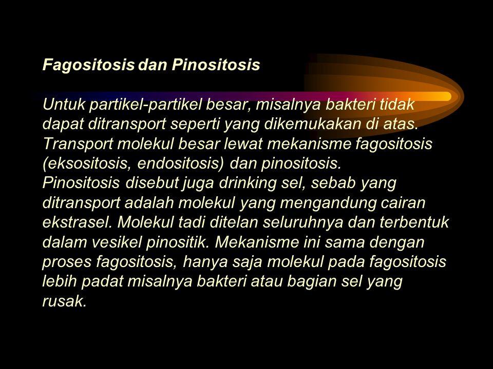 Fagositosis dan Pinositosis Untuk partikel-partikel besar, misalnya bakteri tidak dapat ditransport seperti yang dikemukakan di atas.
