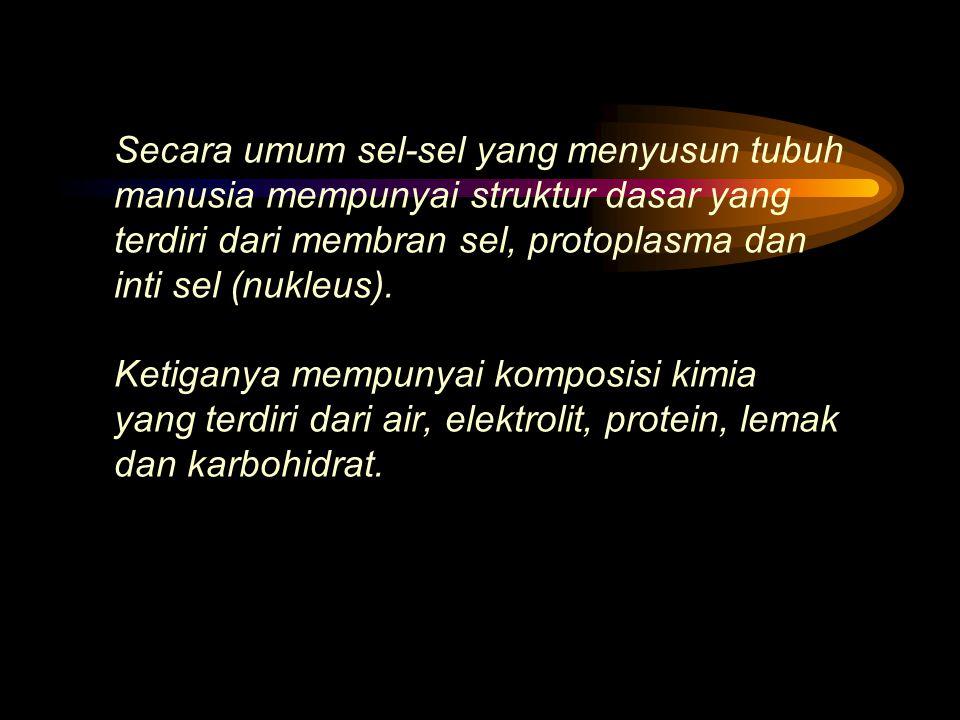 Secara umum sel-sel yang menyusun tubuh manusia mempunyai struktur dasar yang terdiri dari membran sel, protoplasma dan inti sel (nukleus).