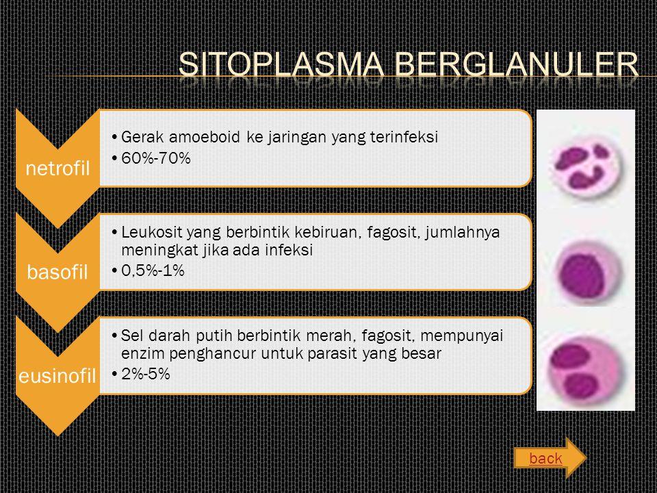 Sitoplasma Berglanuler