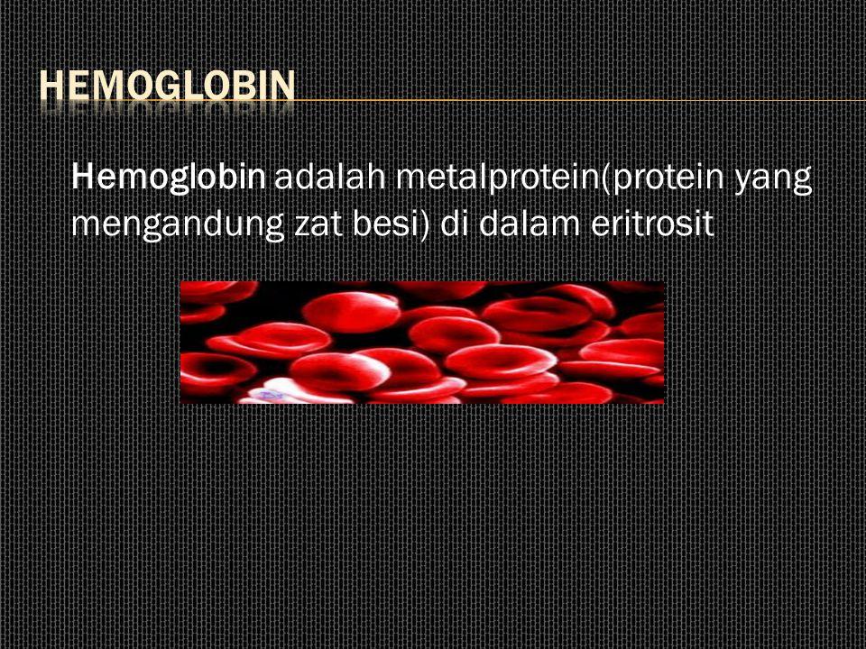 Hemoglobin Hemoglobin adalah metalprotein(protein yang mengandung zat besi) di dalam eritrosit