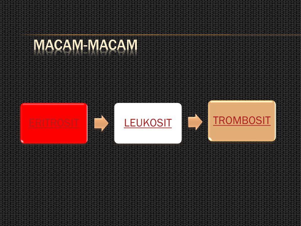 MACAM-MACAM ERITROSIT LEUKOSIT TROMBOSIT