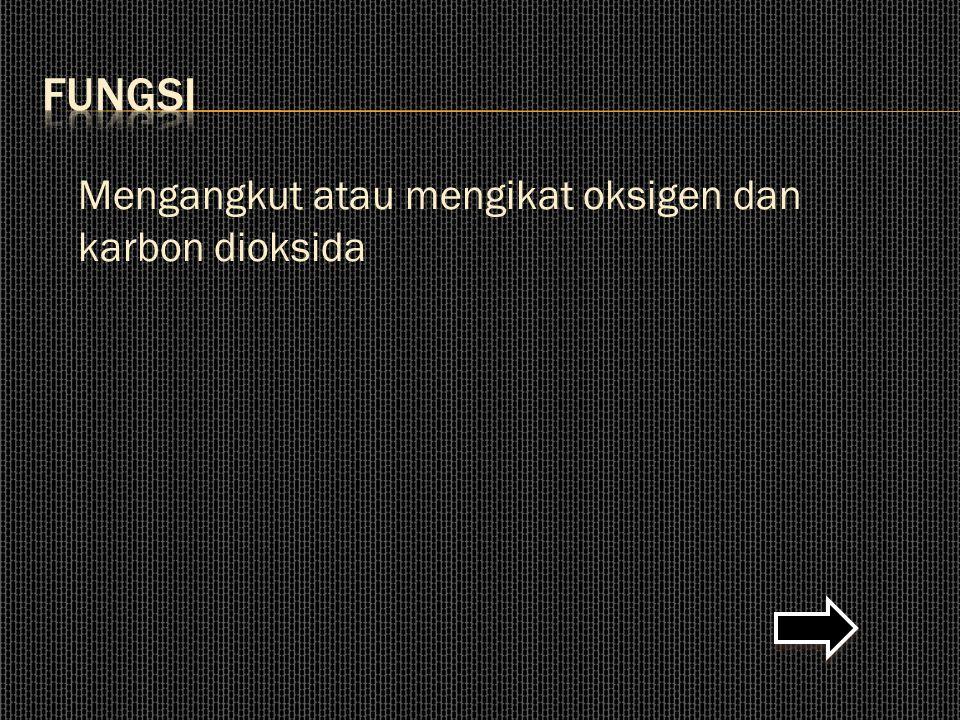 FUNGSI Mengangkut atau mengikat oksigen dan karbon dioksida
