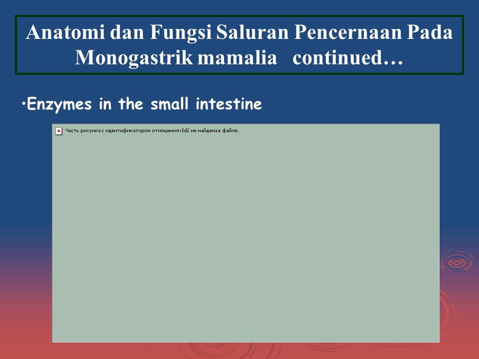 Anatomi dan Fungsi Saluran Pencernaan Pada Monogastrik mamalia continued…