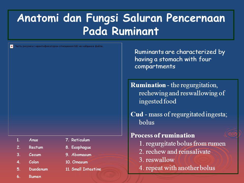 Anatomi dan Fungsi Saluran Pencernaan Pada Ruminant