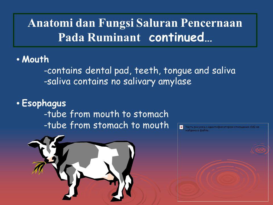 Anatomi dan Fungsi Saluran Pencernaan Pada Ruminant continued…