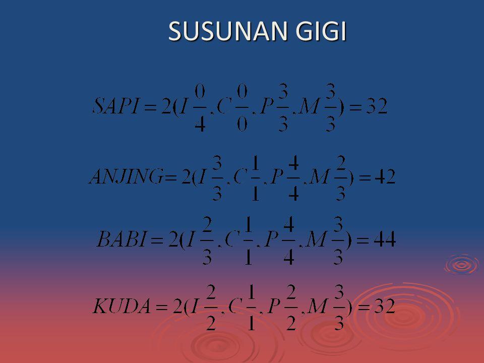 SUSUNAN GIGI