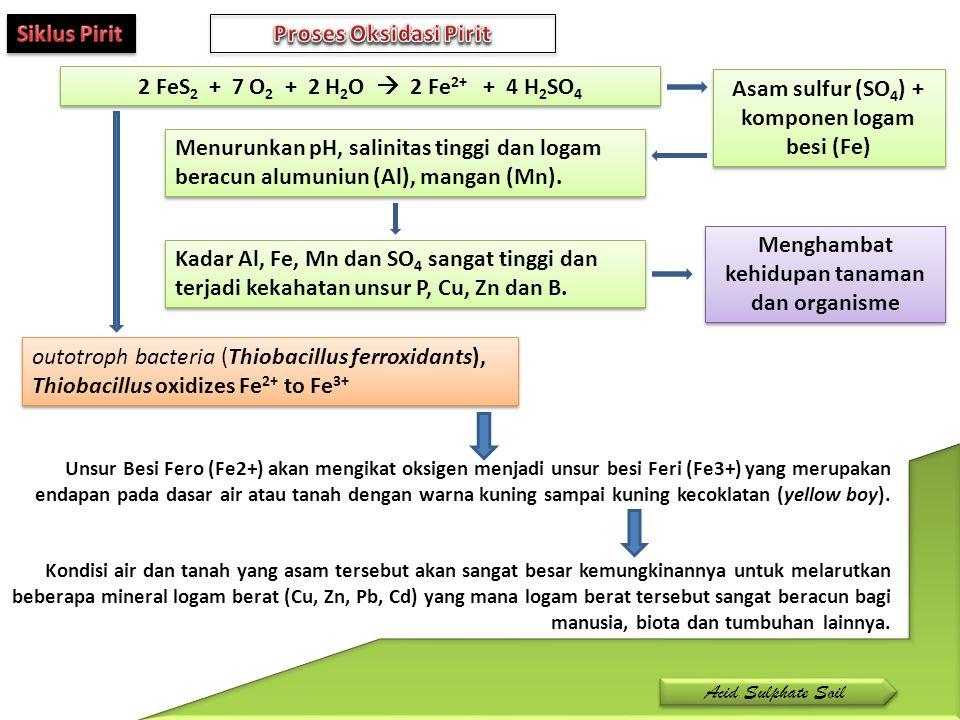 Asam sulfur (SO4) + komponen logam besi (Fe)