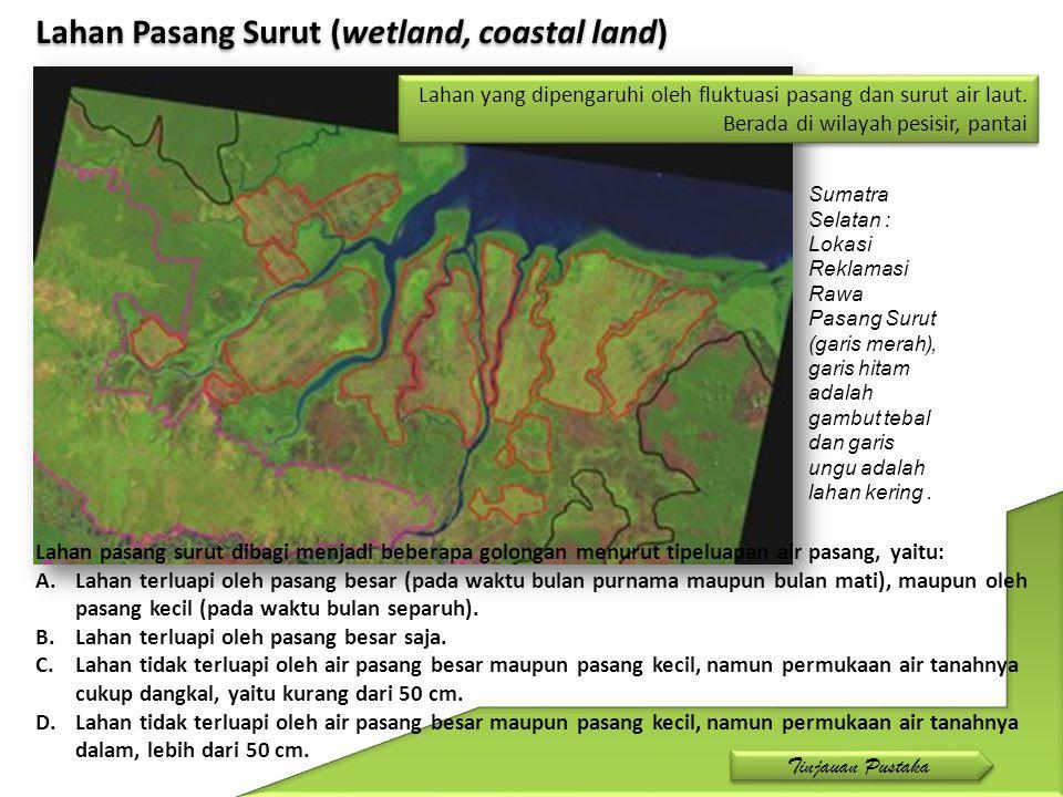 Lahan Pasang Surut (wetland, coastal land)