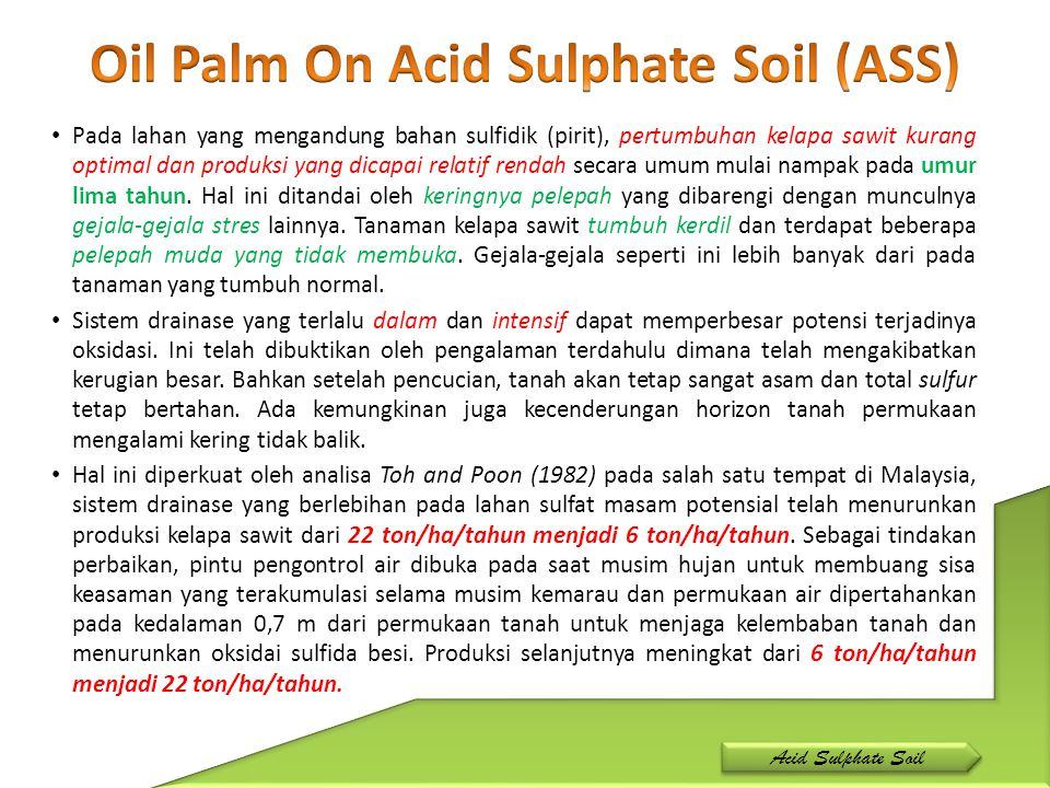 Oil Palm On Acid Sulphate Soil (ASS)