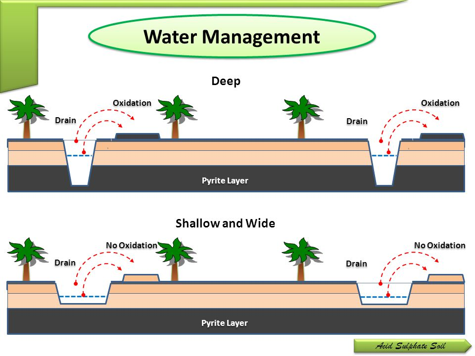 Water Management Deep Shallow and Wide Acid Sulphate Soil Oxidation