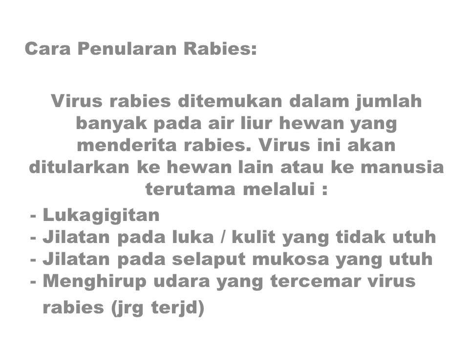 Cara Penularan Rabies: