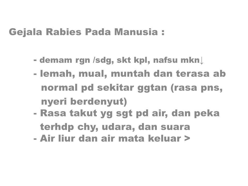 Gejala Rabies Pada Manusia :