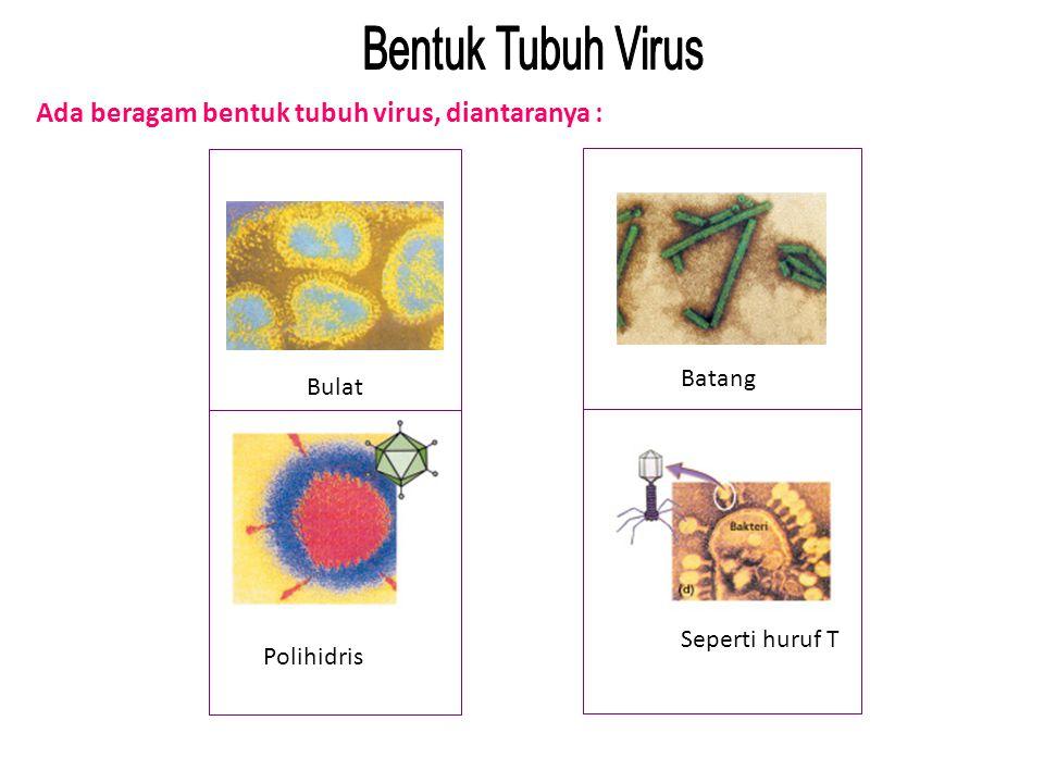 Ada beragam bentuk tubuh virus, diantaranya :