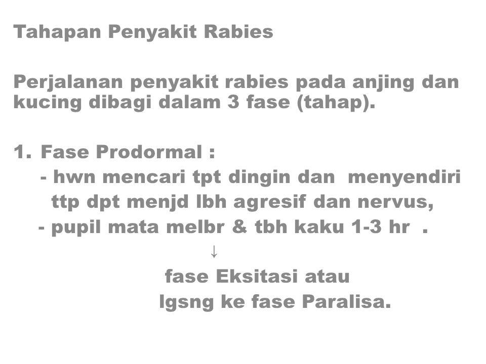 Tahapan Penyakit Rabies