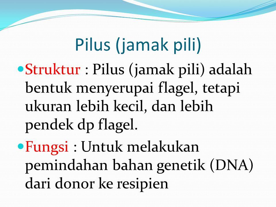Pilus (jamak pili) Struktur : Pilus (jamak pili) adalah bentuk menyerupai flagel, tetapi ukuran lebih kecil, dan lebih pendek dp flagel.