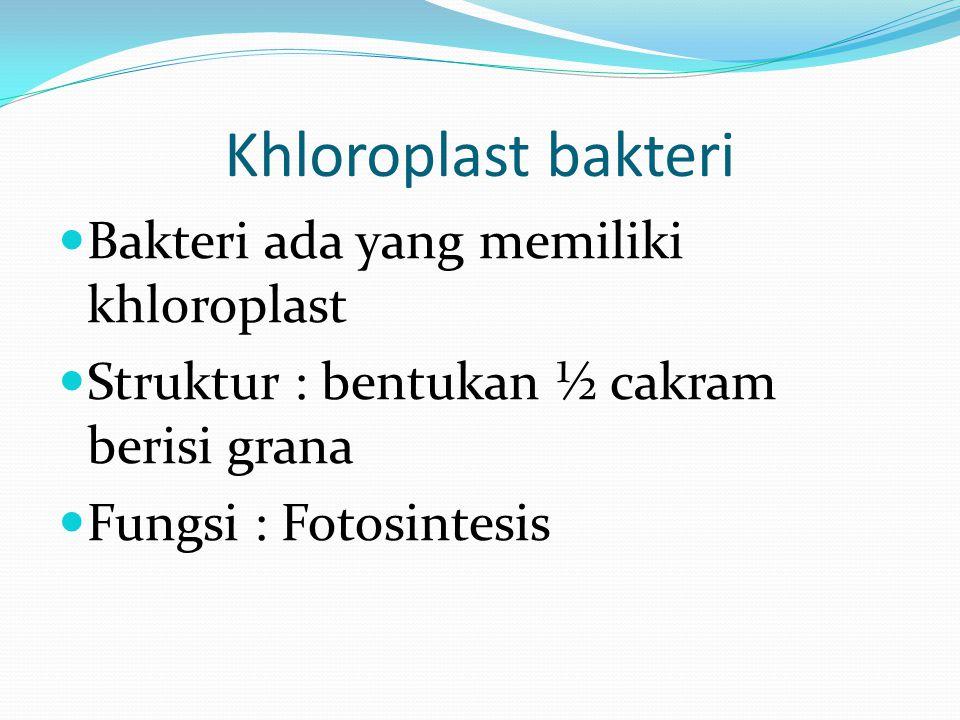 Khloroplast bakteri Bakteri ada yang memiliki khloroplast