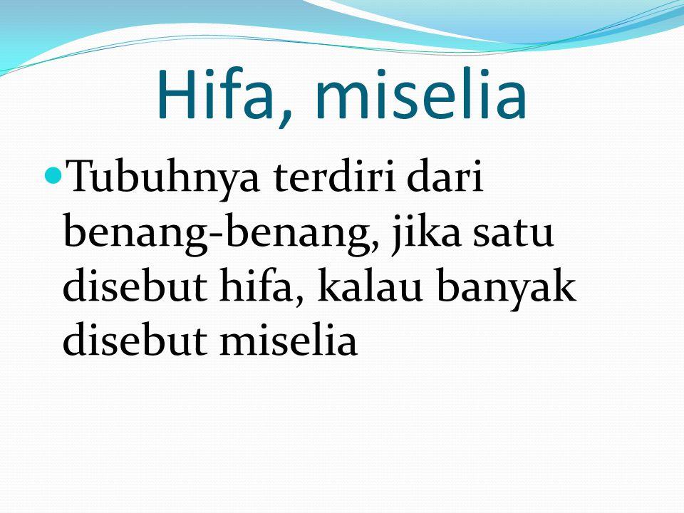 Hifa, miselia Tubuhnya terdiri dari benang-benang, jika satu disebut hifa, kalau banyak disebut miselia.
