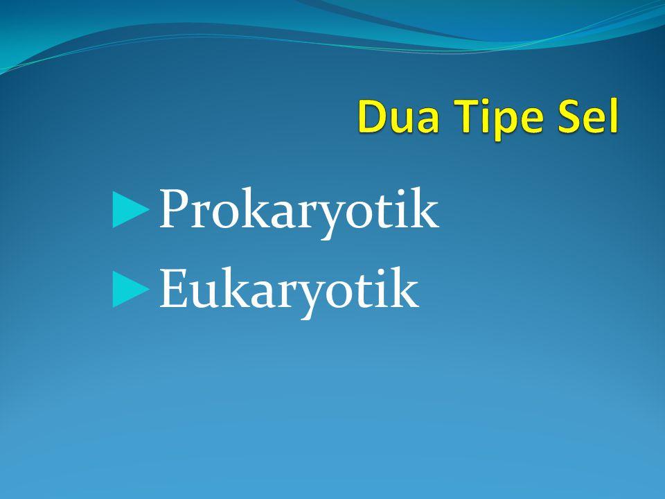 Prokaryotik Eukaryotik