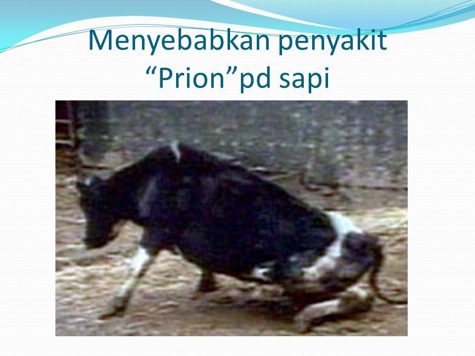 Menyebabkan penyakit Prion pd sapi
