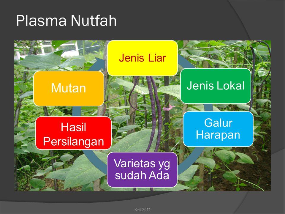Plasma Nutfah Mutan Hasil Persilangan Jenis Liar Kwt-2011 Jenis Lokal