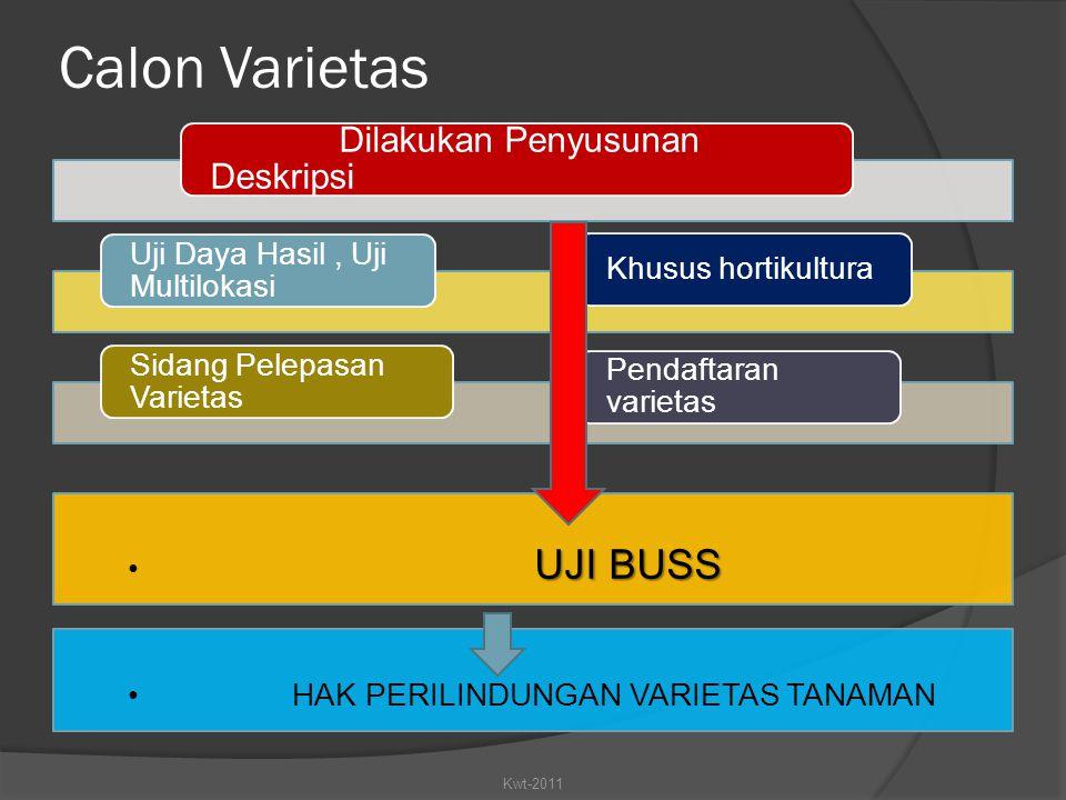 Calon Varietas Dilakukan Penyusunan Deskripsi UJI BUSS Kwt-2011