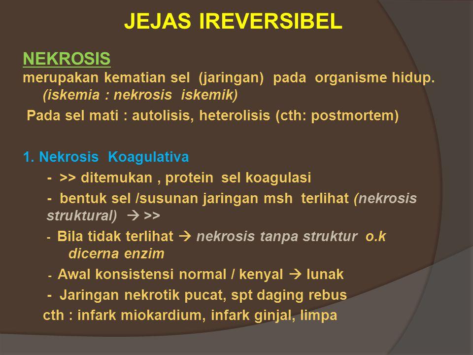 JEJAS IREVERSIBEL NEKROSIS