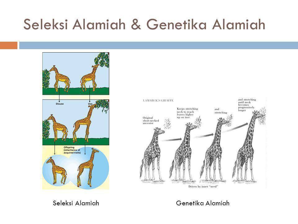 Seleksi Alamiah & Genetika Alamiah