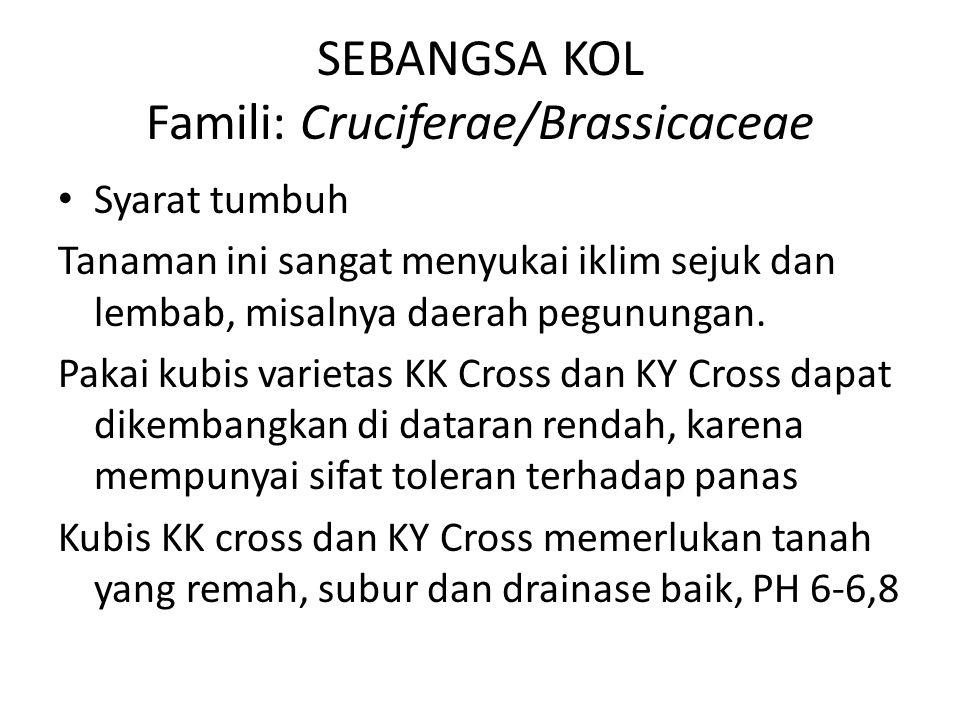 SEBANGSA KOL Famili: Cruciferae/Brassicaceae